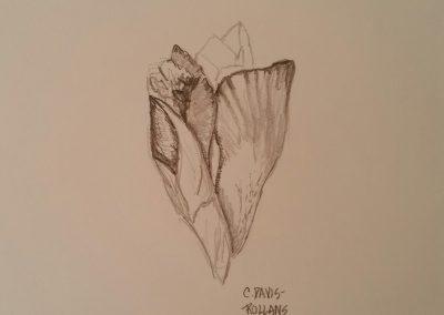 Iris Bud (Flower Study #1)