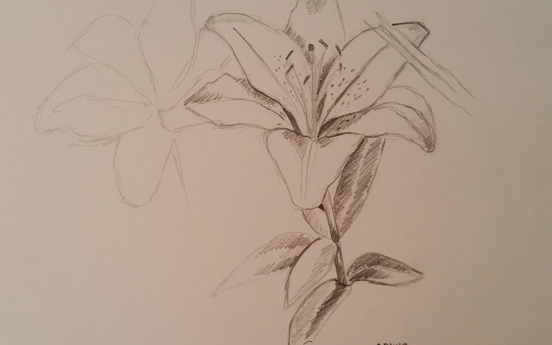 Asiatic Lily (Flower Study #2)