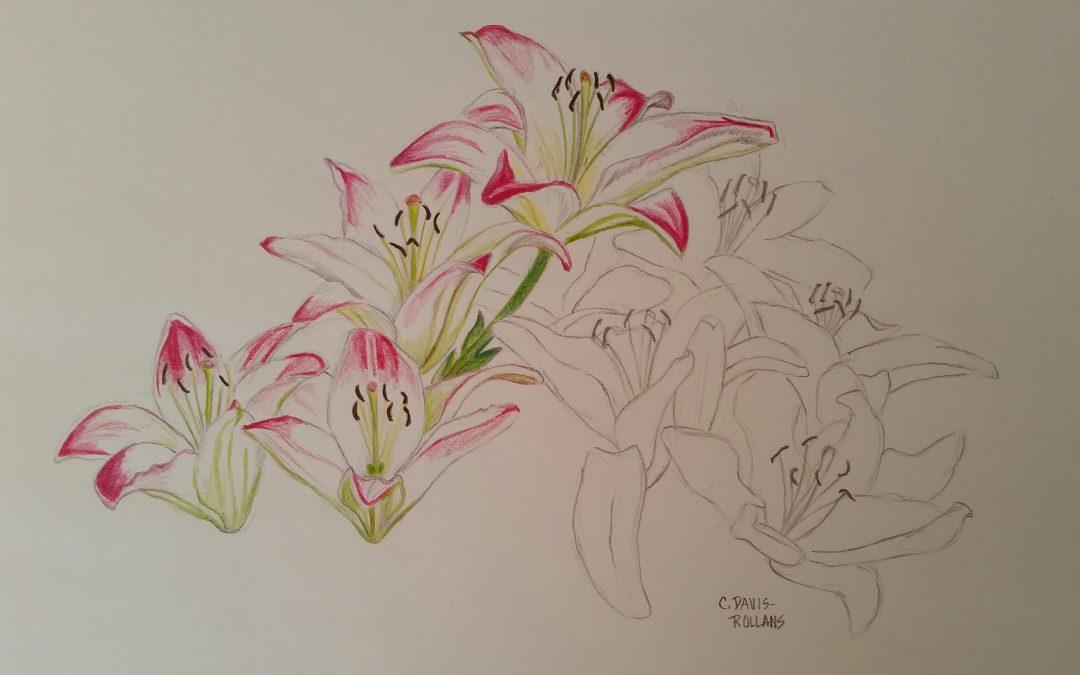 Asiatic Lilies (Flower Study #3)