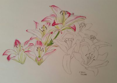 Asiatic Lilies (Flower Study #3)