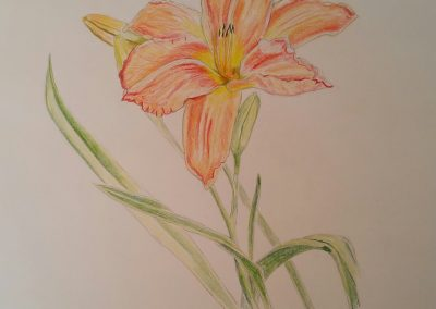 Day Lily (Flower Study #4)
