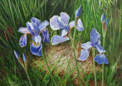 Siberian Iris'